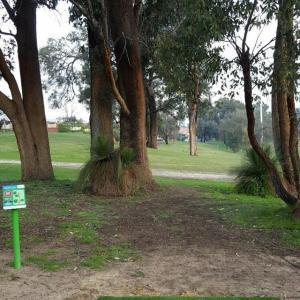 Chichester Park DiscGolfPark