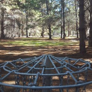 Pine Lines