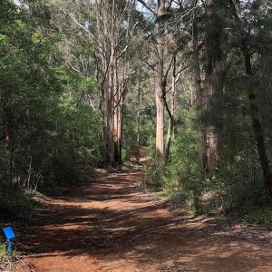 Karri Valley Resort Disc Golf Course